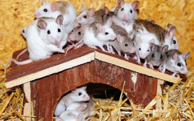 Muizenissen
