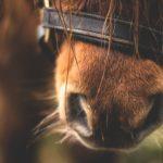 ponykamp