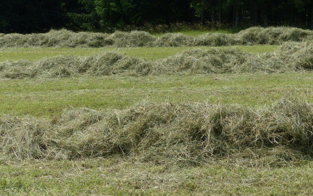 Gras schudden